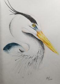 heronwatercolorpencil