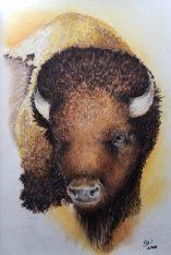 buffalopastelpencil
