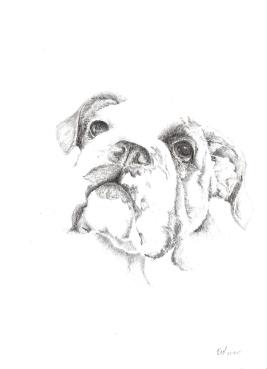 bulldogpencil