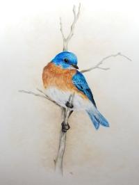 BluebirdMay