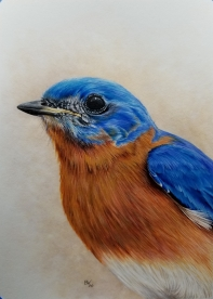 BluebirdAug