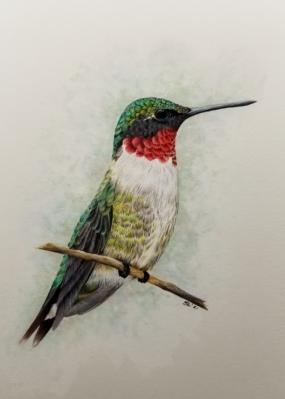 hummingbirdjan2021