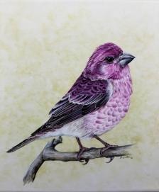 purplefinch