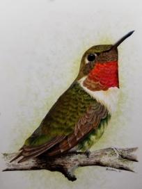 hummingbirdfeb