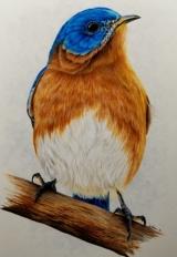 febbluebird